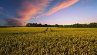 obowiązki rolnika